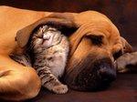 tutela animali